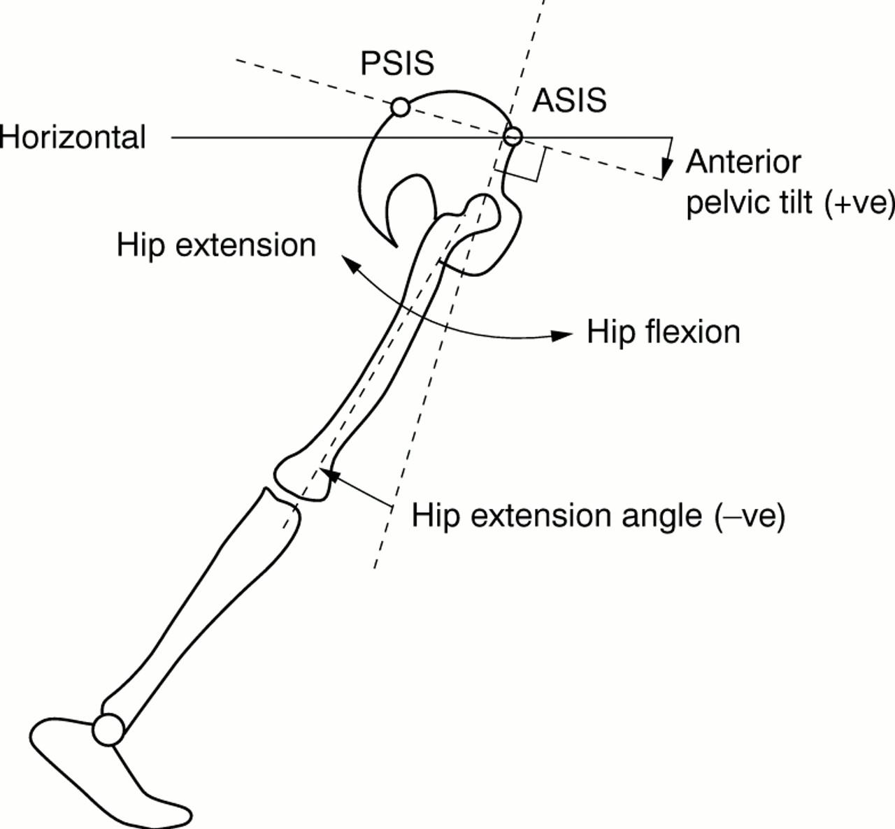 Hip Extension Diagram - Auto Wiring Diagram Today •