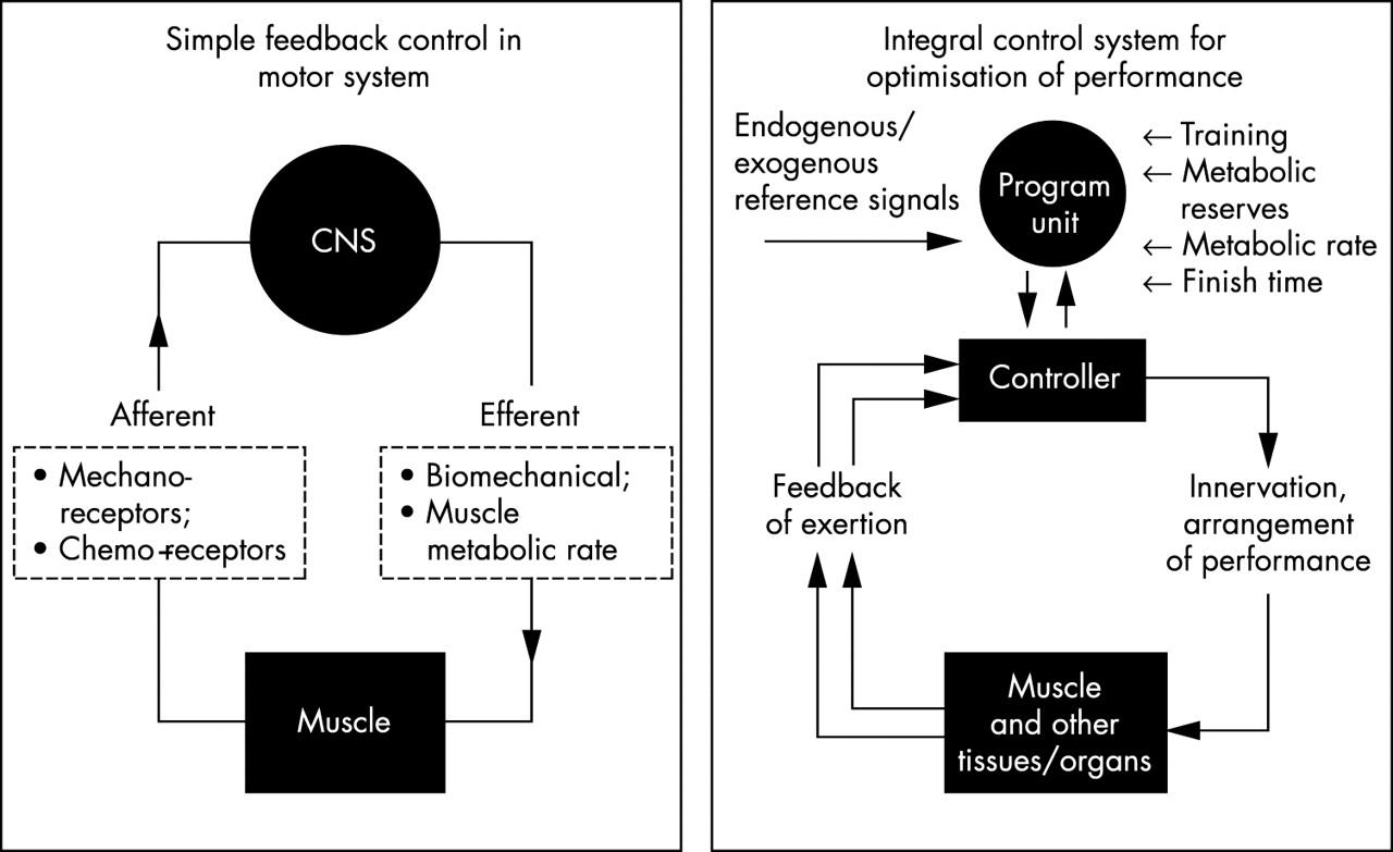 Complex Systems Model Of Fatigue Integrative Homoeostatic Control