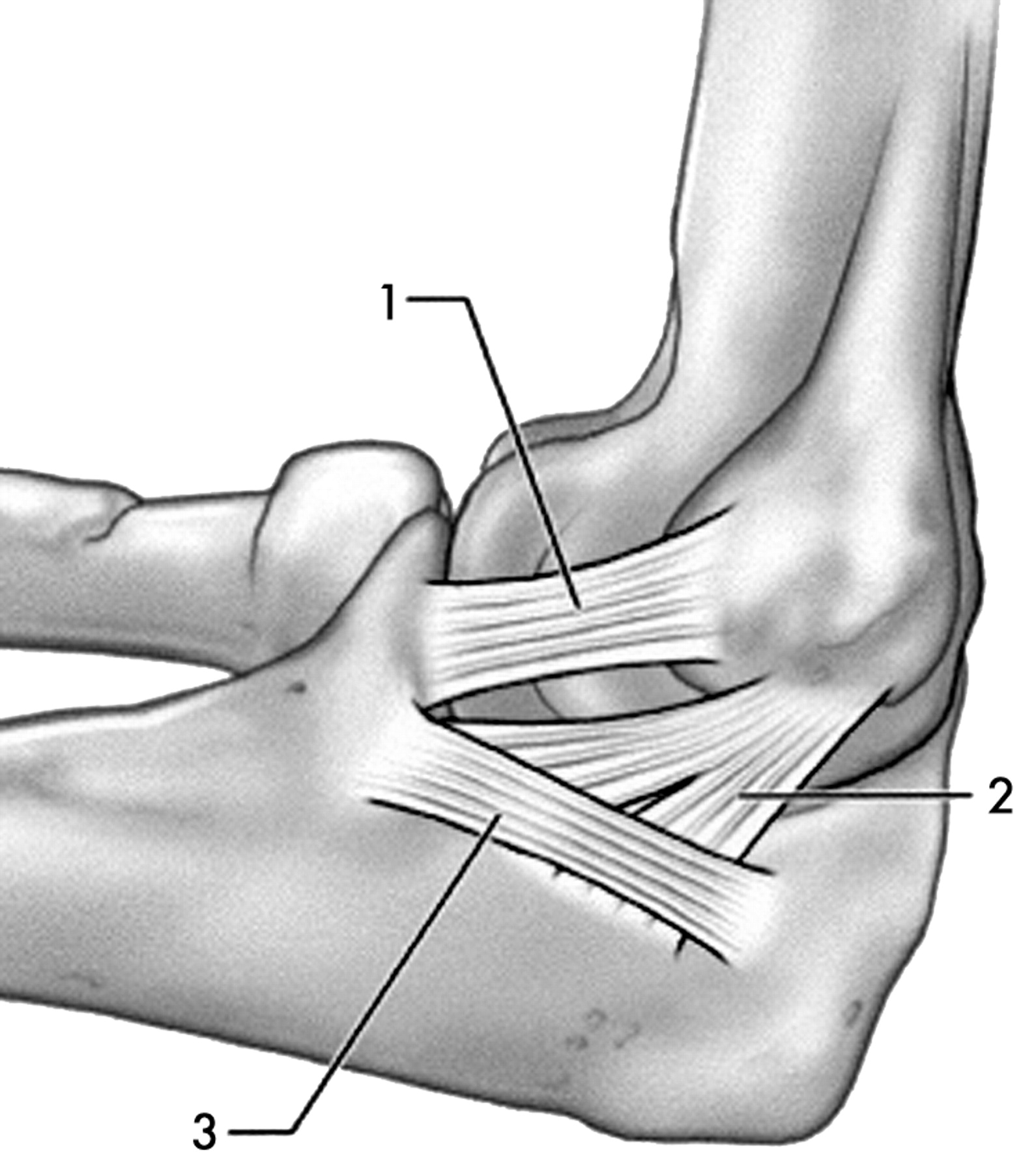 Postero Medial Elbow Problems In The Adult Athlete British Journal