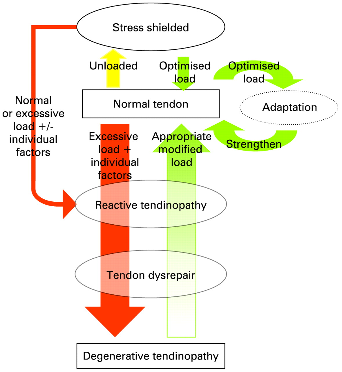 Is Tendon Pathology A Continuum A Pathology Model To