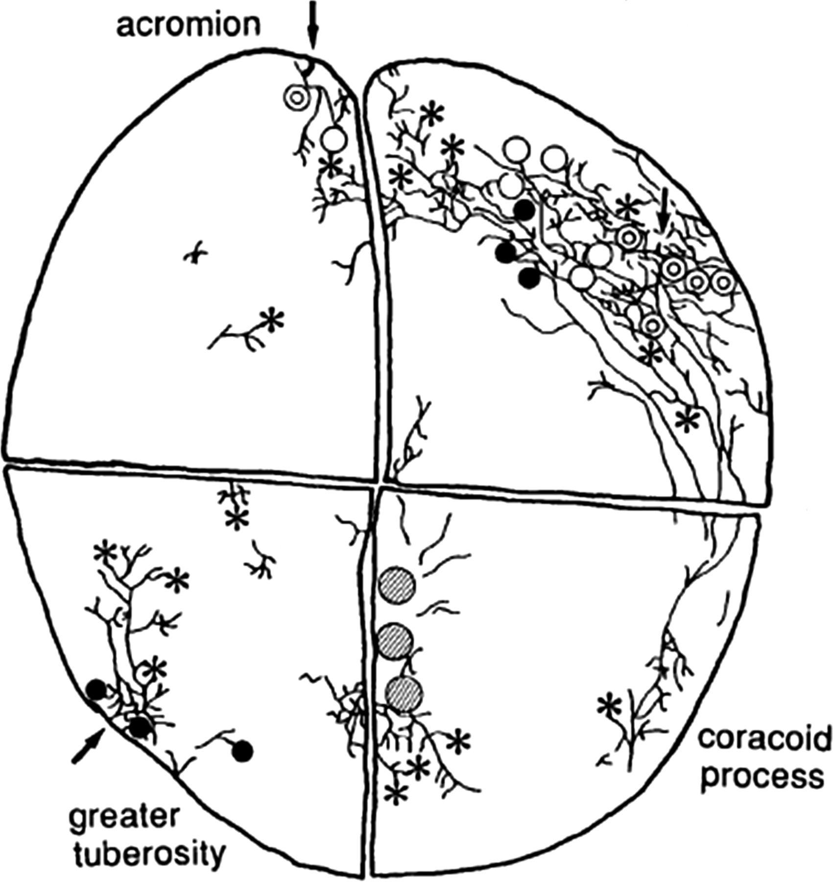 Enchanting Leaf Anatomy Worksheet Key Component - Anatomy and ...