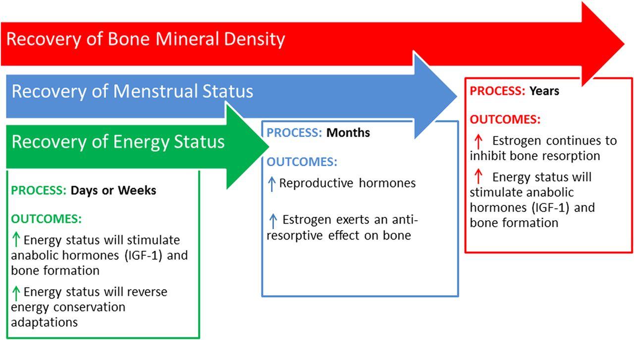 2014 female athlete triad coalition consensus statement on treatment download figure nvjuhfo Gallery