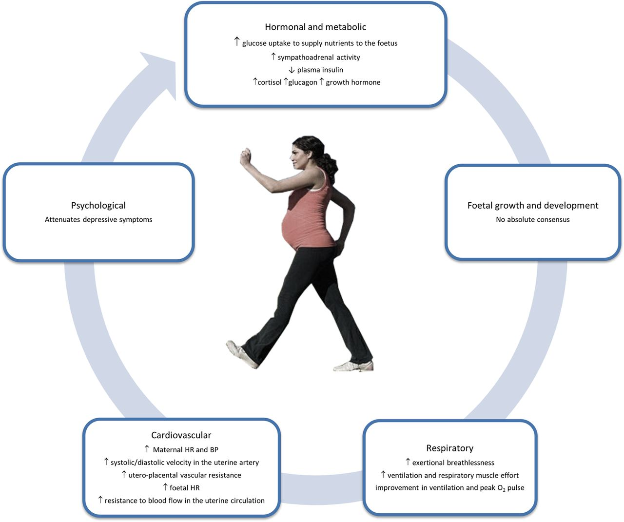 Exercise During Pregnancy A Narrative Review Asking What