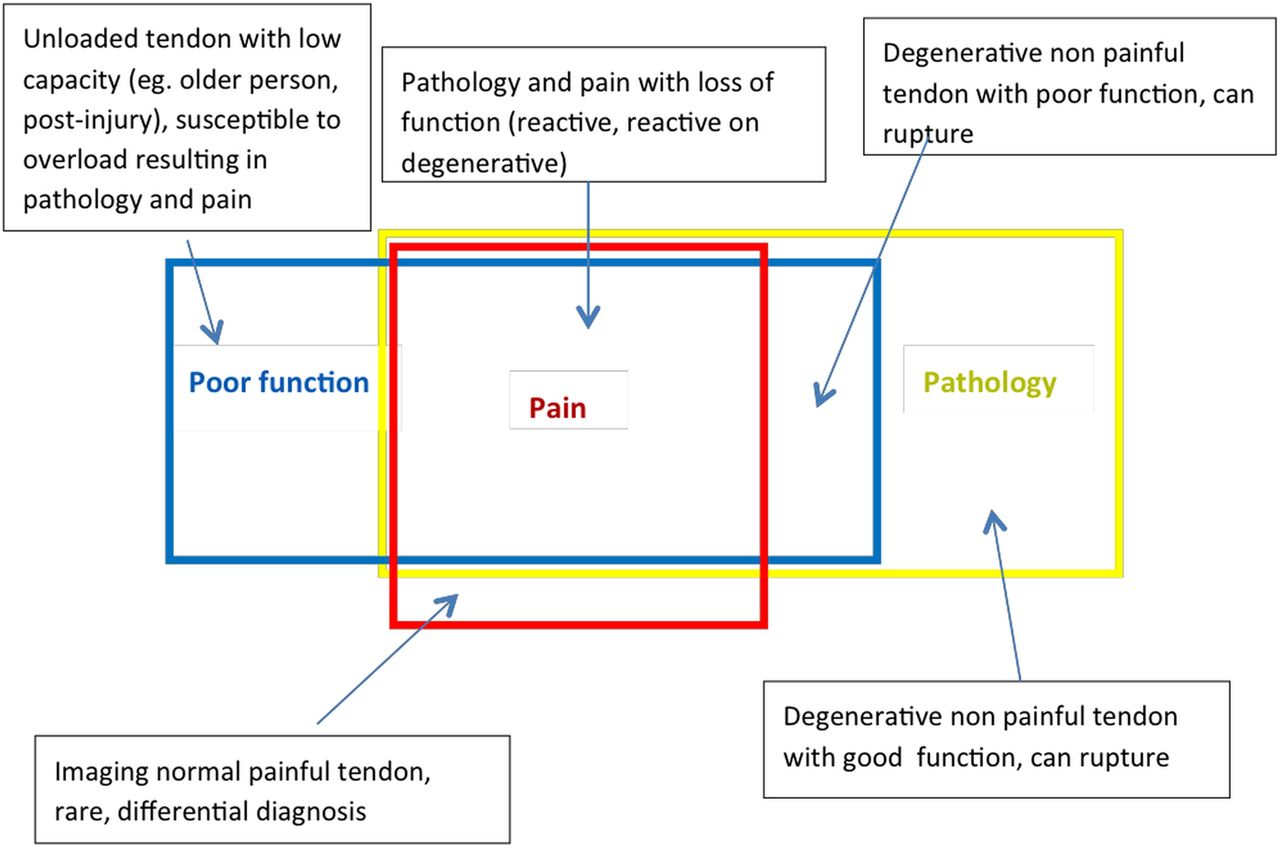 Revisiting the continuum model of tendon pathology: what is its