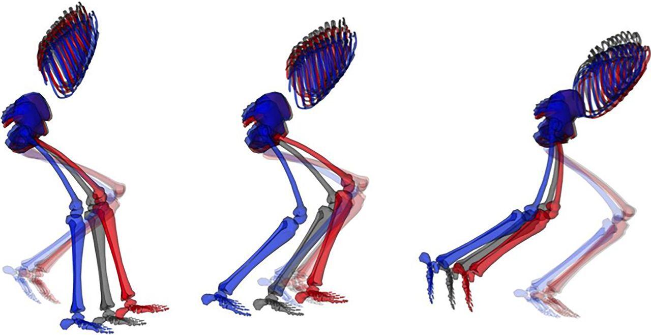 Athletic groin pain (part 2): a prospective cohort study on the ...