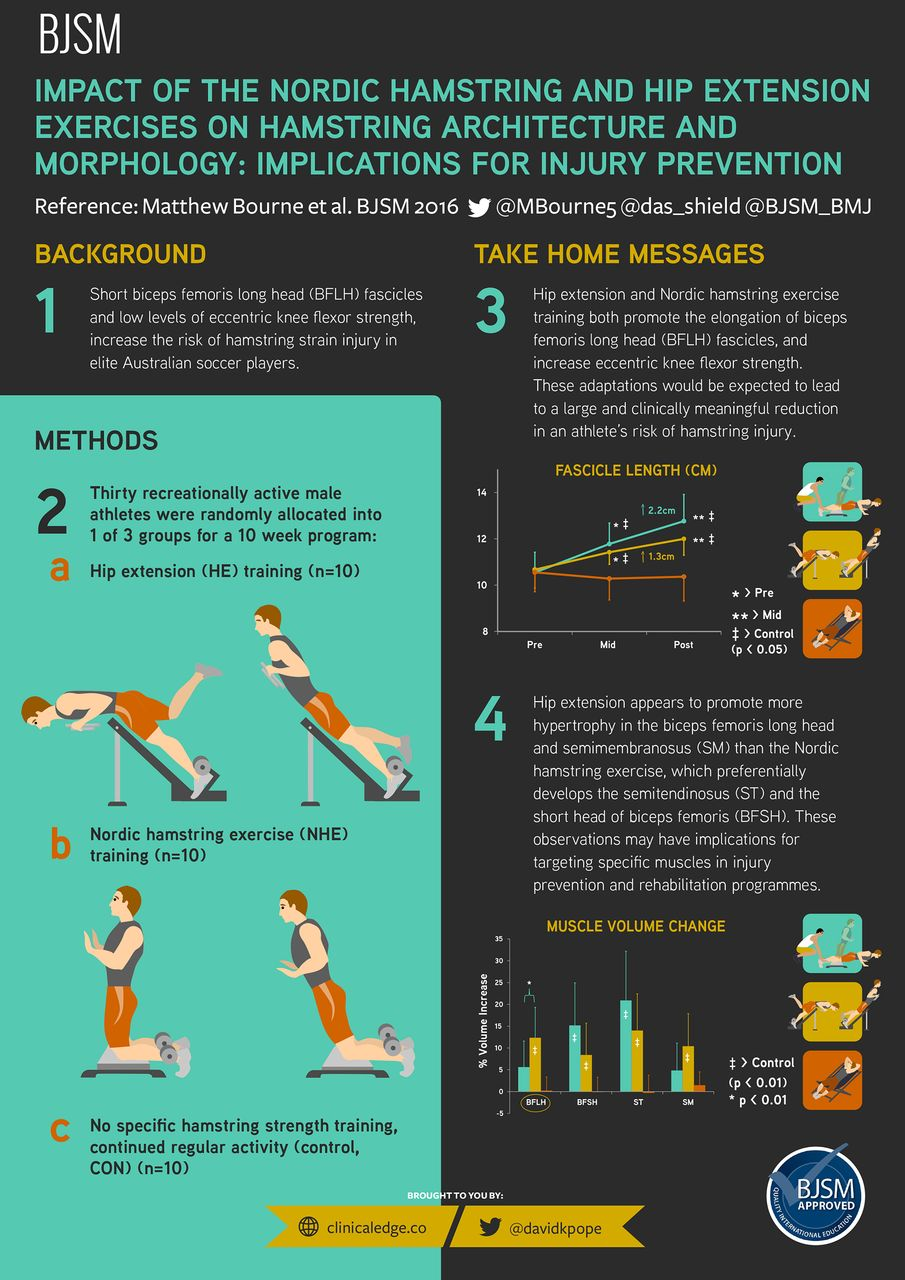 infographic  impact of the nordic hamstring and hip