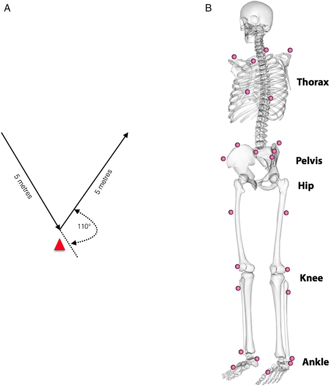 Athletic Groin Pain Part 2 A Prospective Cohort Study On The