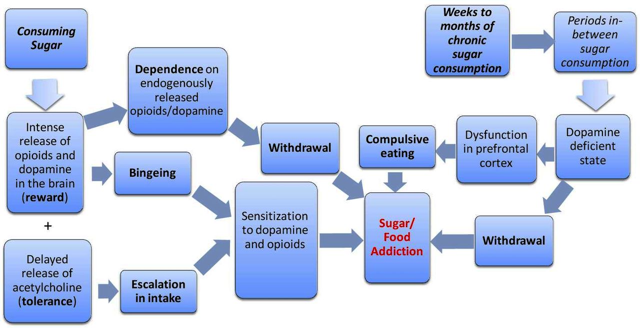 Sugar Addiction Is It Real A Narrative Review British Journal Of Similar Results Simple Brain Diagram 505 Download Figure